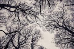 birdstrees-44